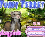 Furry Ferret